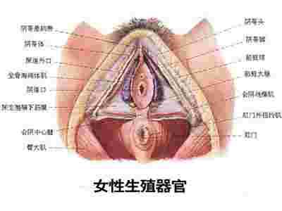 史上最震撼的女性生殖器真实图片