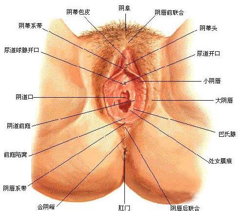 性高潮时阴蒂变化的全过程(套图)