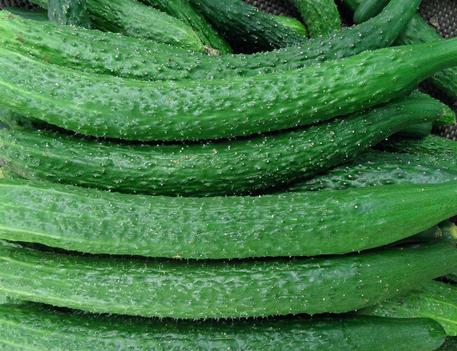 女人吃哪些蔬菜可以减肥