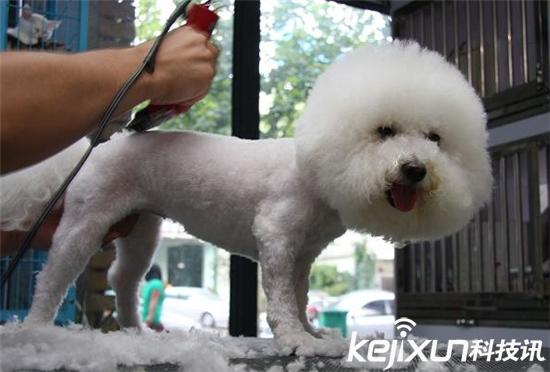 给狗狗剃毛能散热降温?愚蠢的人类