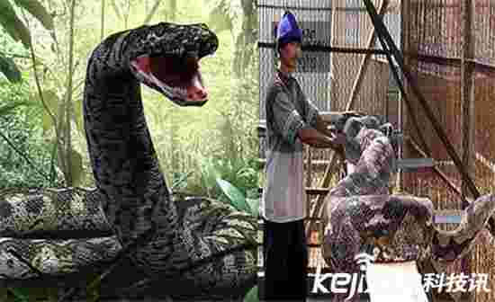 四川蟒蛇吃人事件消息已被封锁
