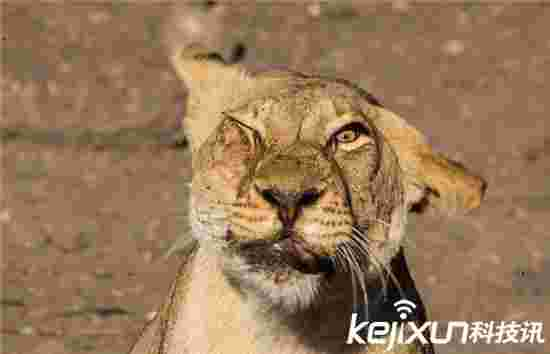 新表情包!母狮驱赶苍蝇表情令人发笑