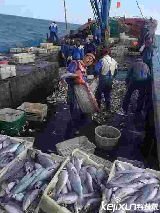 舟山渔船深海捕获白龙王 比人大腿还粗