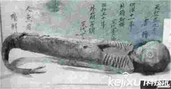 中国最完整美人鱼尸体曝光 简直不忍直视!
