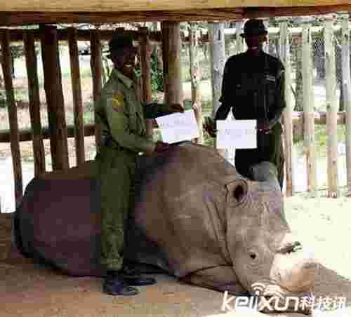 受到总统待遇的白犀牛 比大熊猫还要珍惜