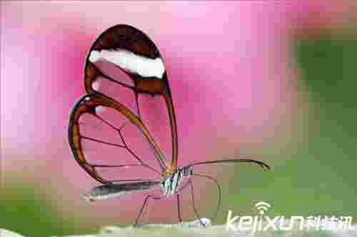 地球上存在的诡异透明生物 透明生物为何存在