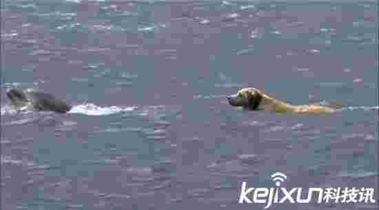 一条守寡的海豚和一只厮守的汪 清奇的画风感人的故事