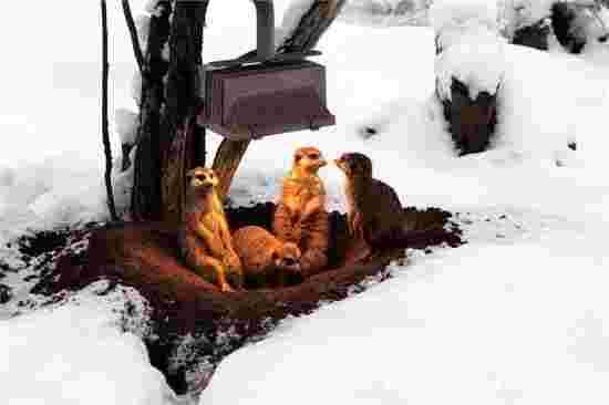 寒冬到来 小动物取暖过冬萌态百出!