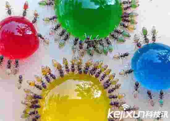 神奇!蚂蚁竟然会变色!