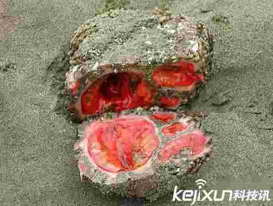 可以吃的智利石头 红红的看着没食欲