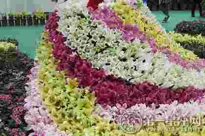 不同颜色的百合花语大全带图片
