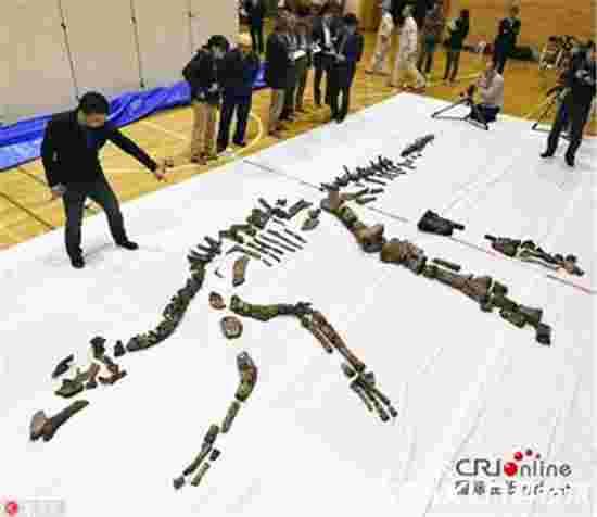 日本发现最大恐龙化石 全长超8米系新物种?