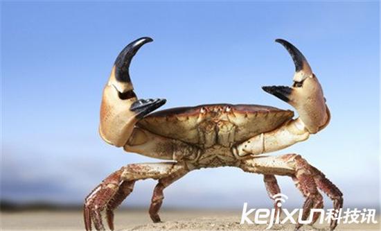 美女沙滩裸晒下体被螃蟹夹住 螃蟹把美女下体当生蚝
