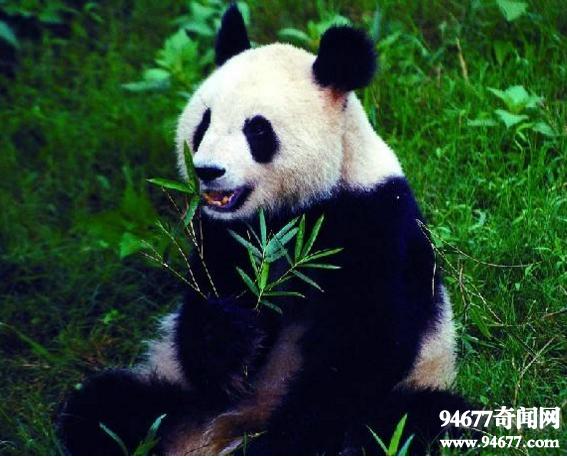 """中国十大濒危动物,失而复得的""""四不像""""(麋鹿)"""