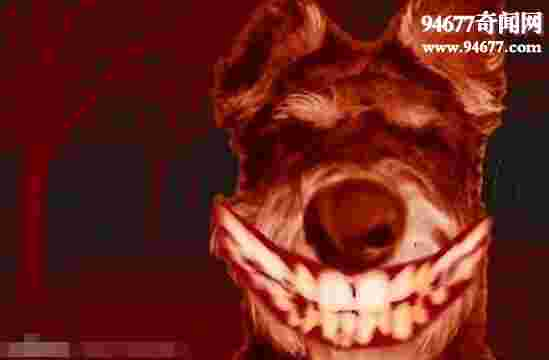 微笑狗(smile dog)原图,作死才会去搜索smile.jpg