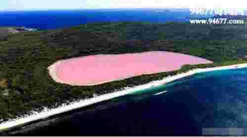 世界奇观粉色希勒湖,天然粉色湖面美的让人窒息