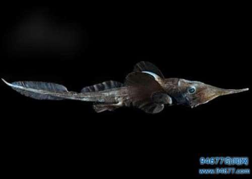 这种鱼类是唯一一种靠使用所有眼睛解决视力问题的
