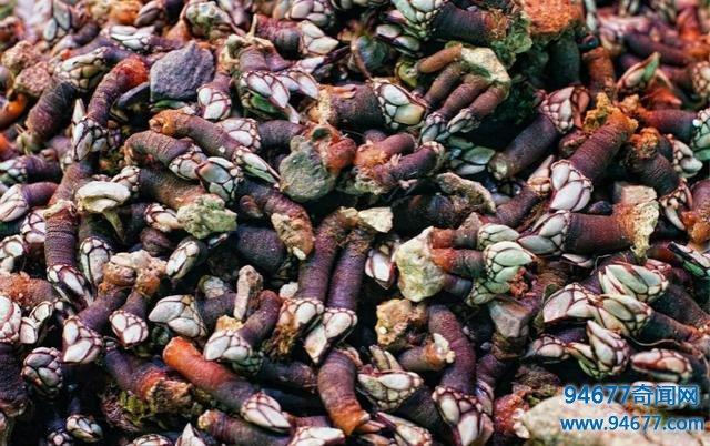 世界上最贵的食材之一,比鱼翅鲍鱼珍贵多,很多人因采摘它而丧命