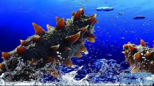 世界八大珍品之一,活了6亿年的海参,到底好在哪儿