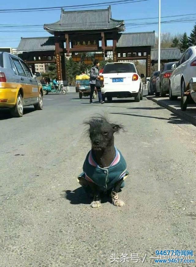 网友遇到世界上最丑的狗,看到它之后我都怀疑人生了!