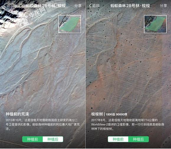 """植树节的另一种""""打开方式"""" 重庆人在网上""""种""""下20.6万棵树"""
