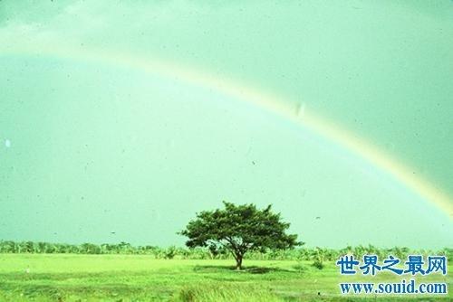 遇到挫折遇到苦难总能想起阳光总在风雨后歌词(www.souid.com)