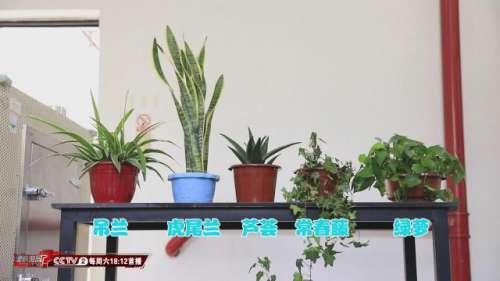 植物能吸收甲醛专家:效果特别有限