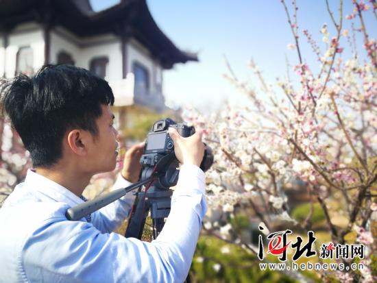 磁县:春风拂面梅花开(图)