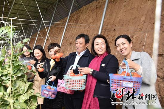 邯郸市肥乡区第二届西红柿采摘文化节开幕