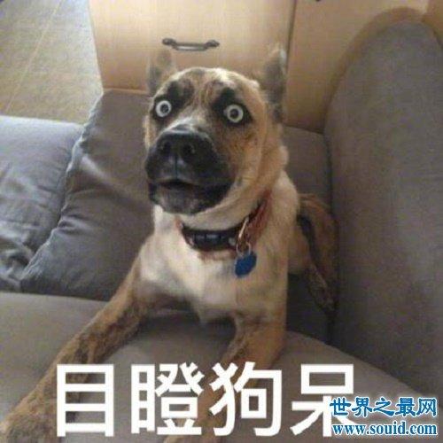 梦见狗,梦见狗意味着什么,有什么好预兆,需要注意什么(www.souid.com)