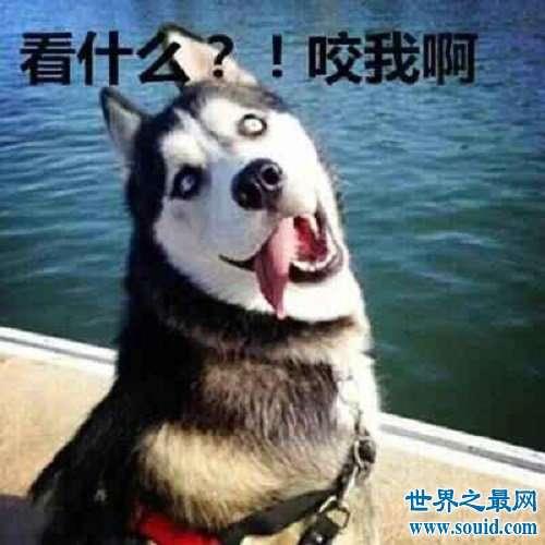 梦见狗,梦见狗意味着什么,有什么好预兆,需要注意什么