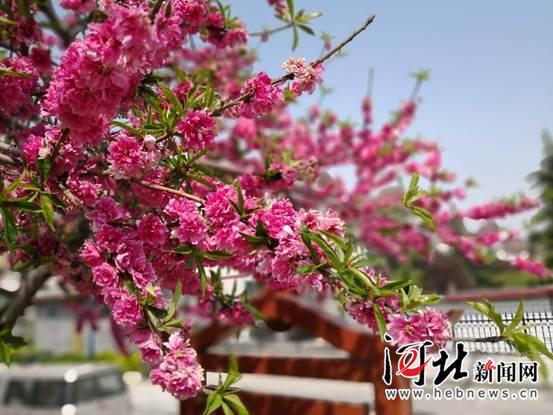 """解读武安市白沙村""""幸福密码"""""""