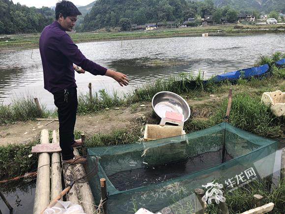 种青脆李养小龙虾 来看彭水县岩东乡不一样的脱贫方式