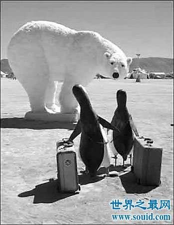 未解之谜之北极熊这个食肉动物为什么不企鹅呢