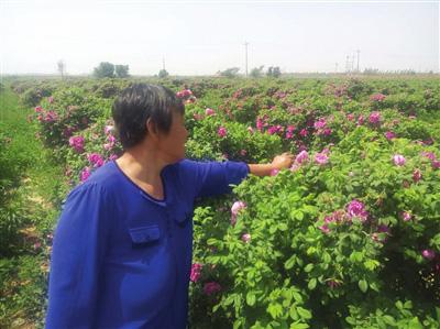 邱县大力发展特色农业种植