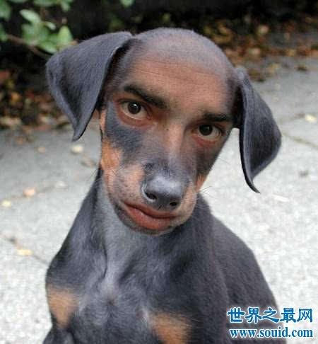 自然中各种人面动物,都长着奇异的脸(www.souid.com)