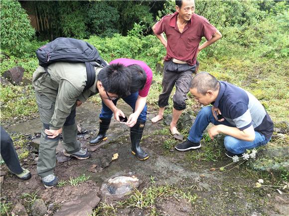 一村民放马回家发现亿年龟化石 专家确认生活于侏罗纪时期