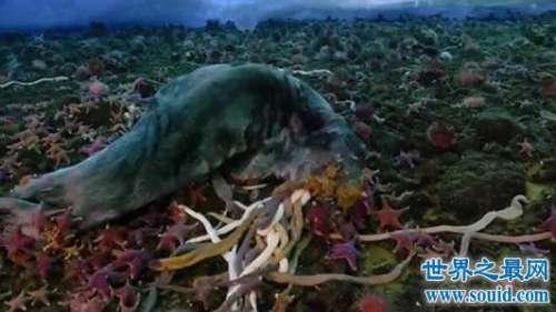 南极巨虫身长三米吞食海豹 全球变暖不容忽视