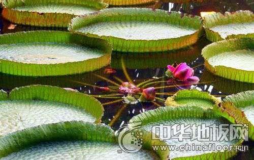 四种世界珍稀植物介绍 珍惜植物图片大全