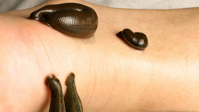 暴君水蛭  7米长吸血杀人非常恐怖