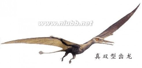 有关恐龙的资料 有关恐龙的资料及图片