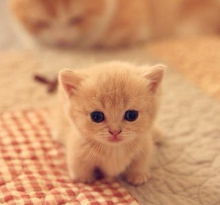猫咪寿命 年仅十年 你想过它老了该怎么照顾它吗