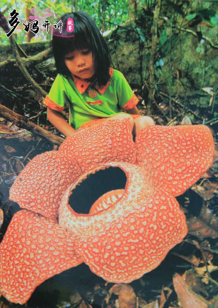 你知道世界上最大的花 和最小的花吗?