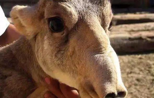 奇特的动物 地球中最奇特的21种 动物