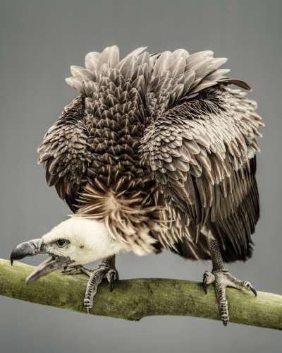 寿命最长的鸟 世界上寿命最长的鸟类,它最高可活到七十岁。