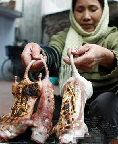 老鼠肉可以吃吗 越南人爱吃老鼠肉 极品每斤可卖两美元