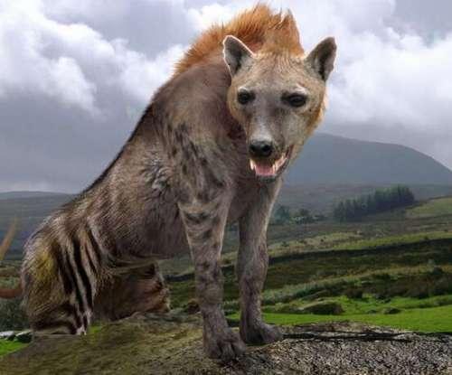 巨鬣狗 远古最强猛兽,叫声似人类狂笑,非洲最强肉食动物