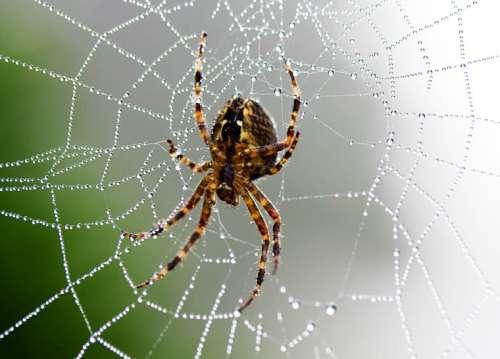 蜘蛛吃什么 蜘蛛才是地球上的大胃王 一年内可吃掉全人类