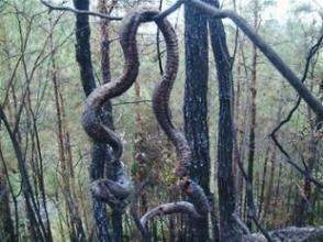 辽宁巨蛇渡劫化龙事件 山东真实的蛇化龙的事