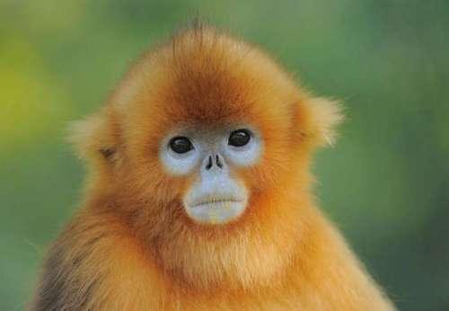 我国有哪些珍稀动物 我国有哪些独有的珍稀动物近乎灭绝?